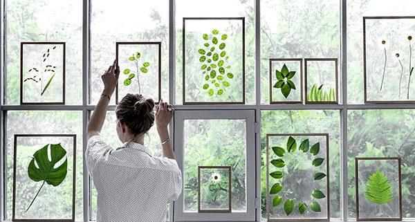 bilderrahmen - transparent, eiche, acrylglas