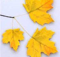 sticky leaves / leaf - haftnotizen
