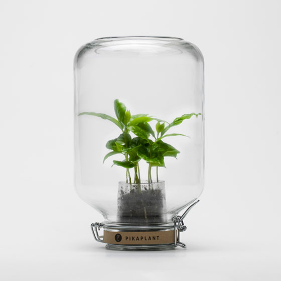 mini glashaus